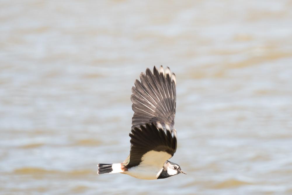 vogels-2